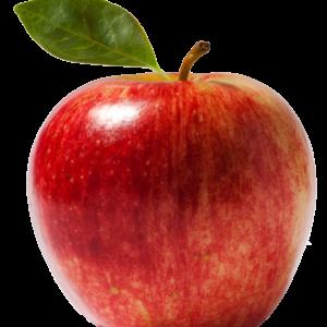 apple frruit